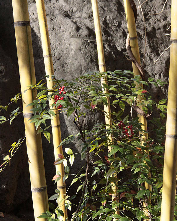 Bamboo Poster featuring the photograph Bamboo by Linda A Waterhouse