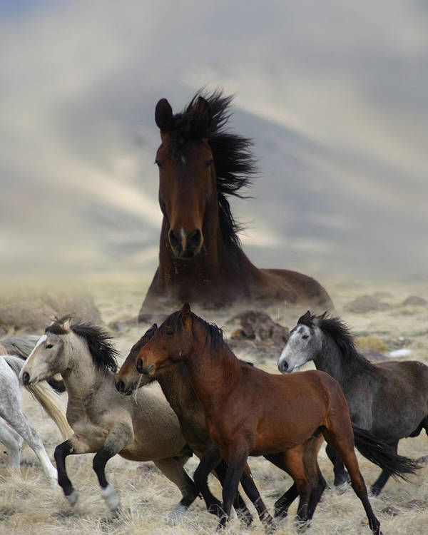Horse Poster featuring the photograph Band Of One by Gene Praag