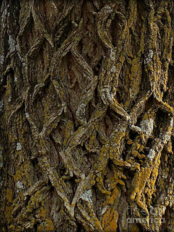 Tree Poster featuring the photograph Bark by Sharon Woodrum