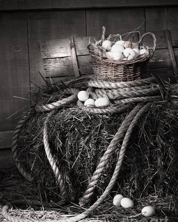 Background Poster featuring the photograph Basket Of Eggs On A Bale Of Hay by Sandra Cunningham