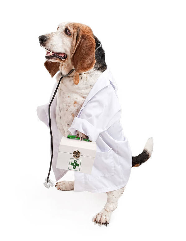 Dog Poster featuring the photograph Basset Hound Dog Dressed As A Veterinarian by Susan Schmitz