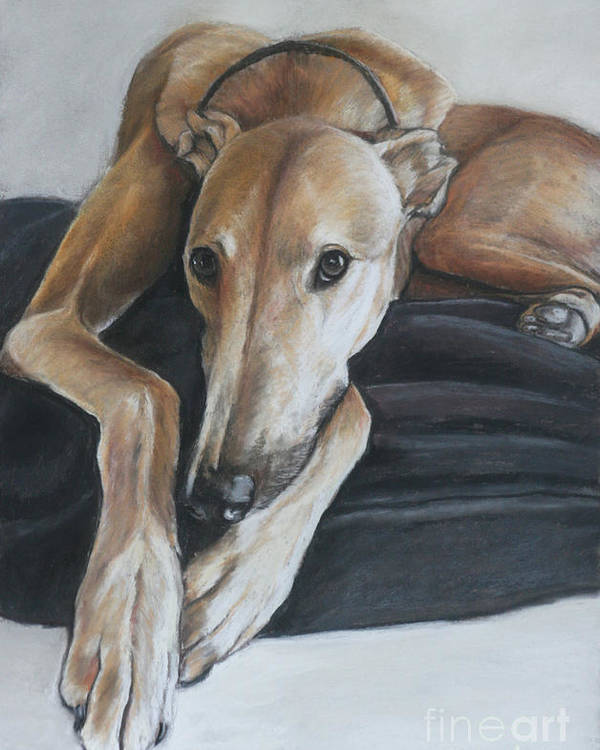 Dog Poster featuring the painting Bauregard by Charlotte Yealey