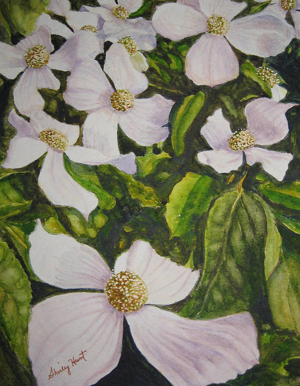 Landscape Poster featuring the painting Bc Dogwoods by Shirley Braithwaite Hunt