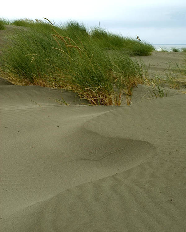 Beach Poster featuring the photograph Beach Grass by Jessica Wakefield