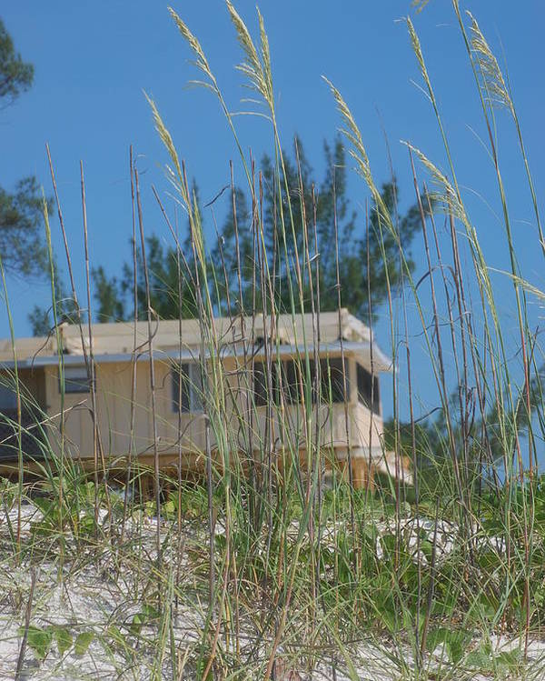 Landscape Poster featuring the photograph Beach House Through Sea Oats by Lisa Gabrius