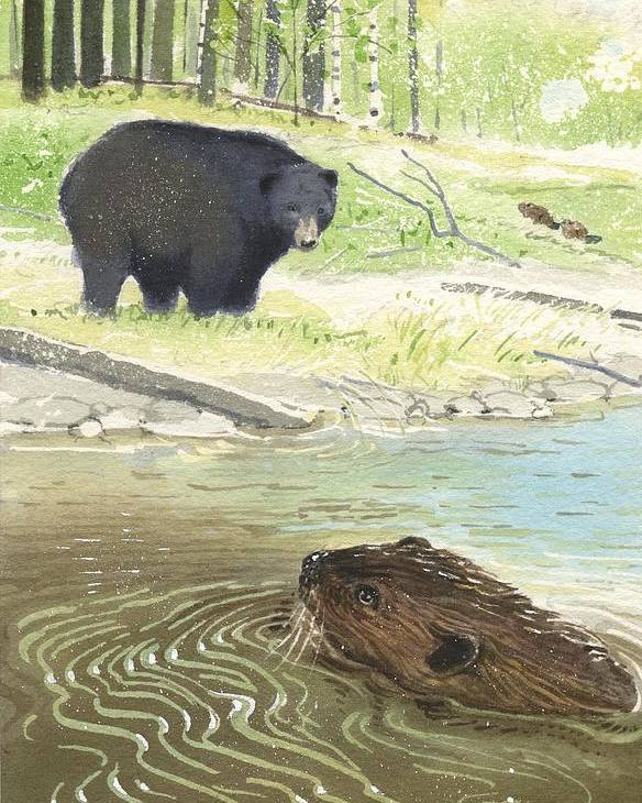 Beaver Poster featuring the painting Beaver by Denny Bond