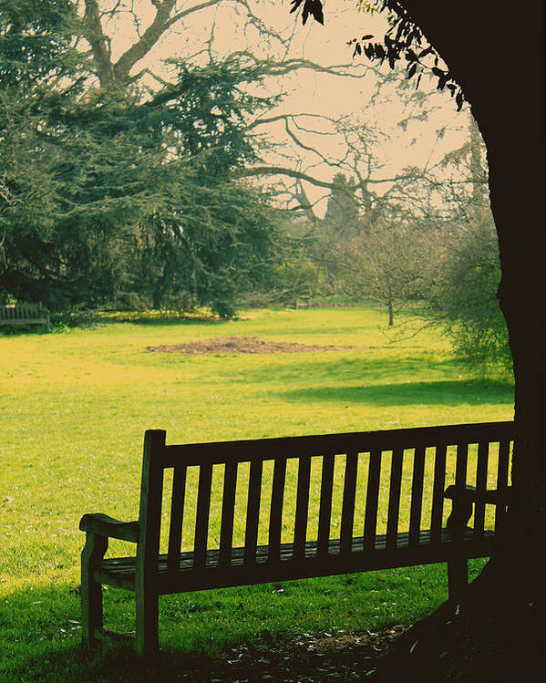 Empty Bench Poster featuring the photograph Bench Under A Tree by Jasna Buncic