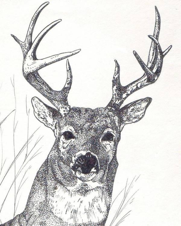 Whitetail Deer Poster featuring the painting Big Buck by Debra Sandstrom
