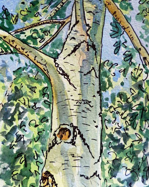 Birch Poster featuring the painting Birch Tree Sketchbook Project Down My Street by Irina Sztukowski