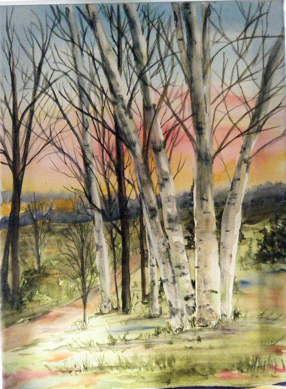 Trees Poster featuring the painting Birch Trees On Canvas by Diane Ziemski