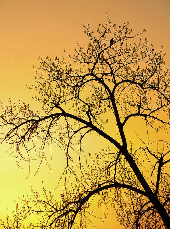 Sunset Photography. Bird In Tree. Bird Photography. Yellow Sunset. Fine Art Photography Greeting Cards. Fine Art Photography. Sunset Greeting Cards. Tree Photography. Fine Art Wall Photography. Wildlife Photography. Poster featuring the photograph Bird At Sunset by James Steele