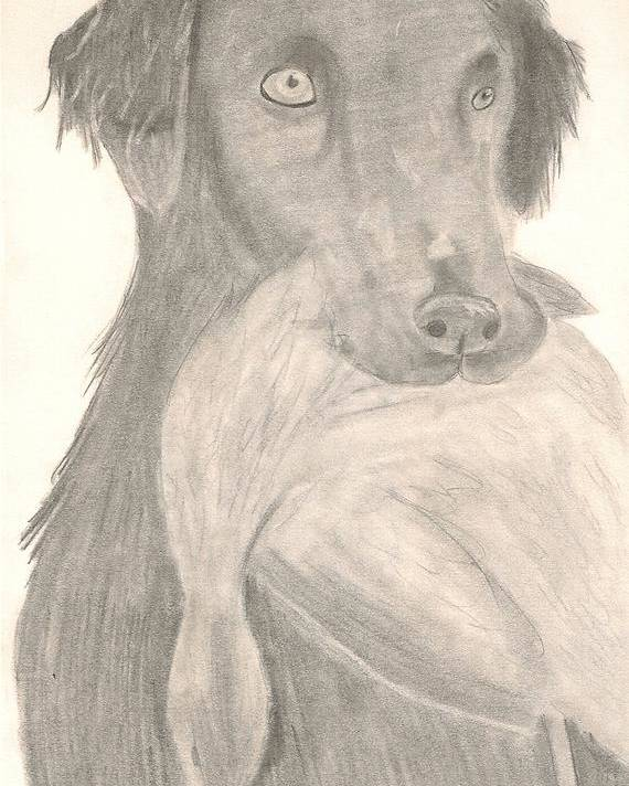 Dog Poster featuring the drawing Bird Dog by Kristen Hurley