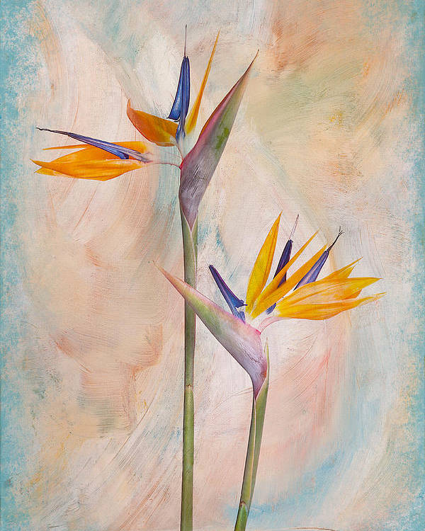 Flower Poster featuring the photograph Bird Of Paradise I by Michelle Whitmore