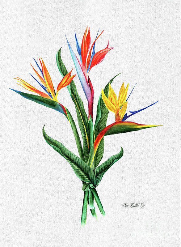 Bird Of Paradise Poster featuring the painting Bird Of Paradise by Peter Piatt