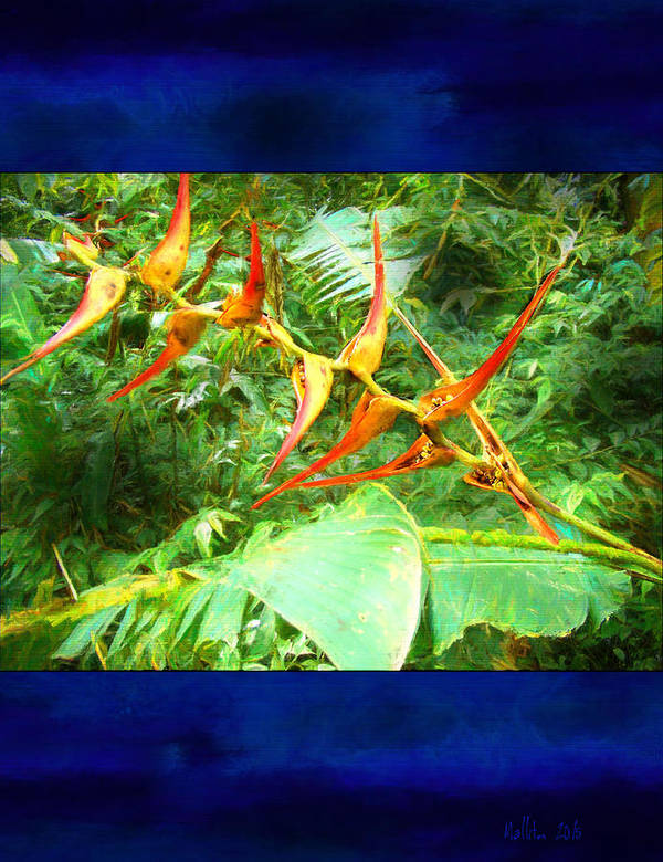 Exotic Plant Poster featuring the photograph Bird Of Paradise Quepos Costa Rica by Marty Malliton