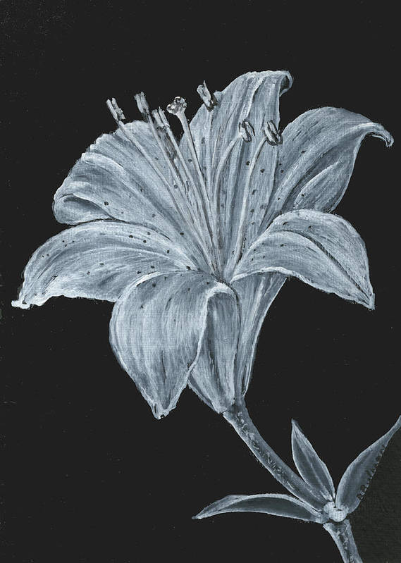 Lily Poster featuring the painting Black And White Asiatic Lily by Richard Bulman