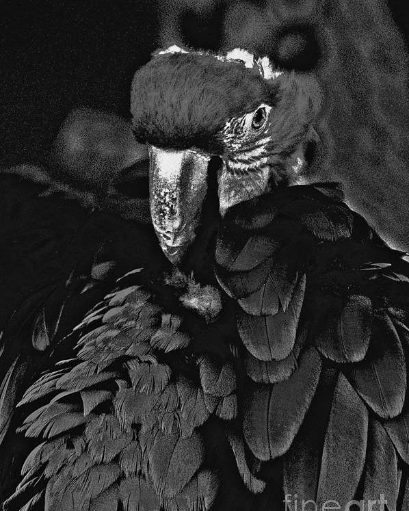 Black And White Poster featuring the photograph Black And White Bad Ass Bird by David Frederick