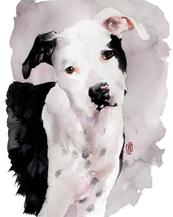 Pit Bull Dog Poster featuring the painting Black And White Pit by Debra Jones