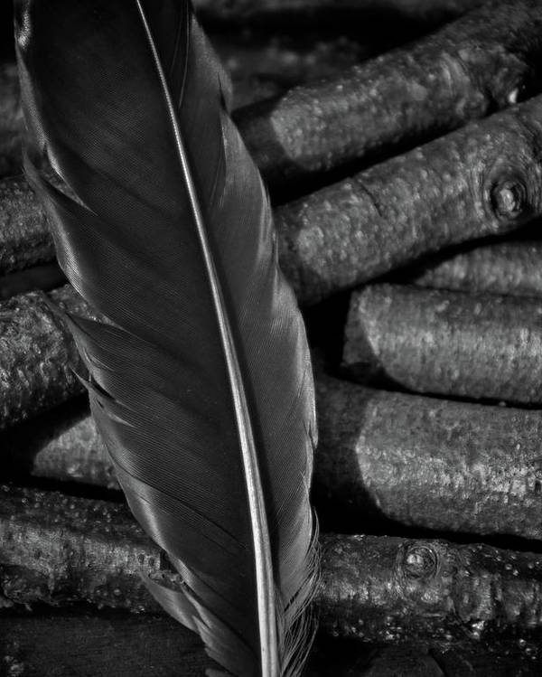 Black Feather Poster featuring the photograph Black by Odd Jeppesen