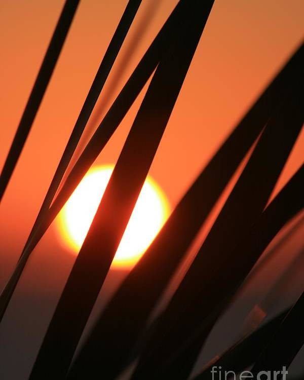 Sun Poster featuring the photograph Blazing Sunset And Grasses by Nadine Rippelmeyer