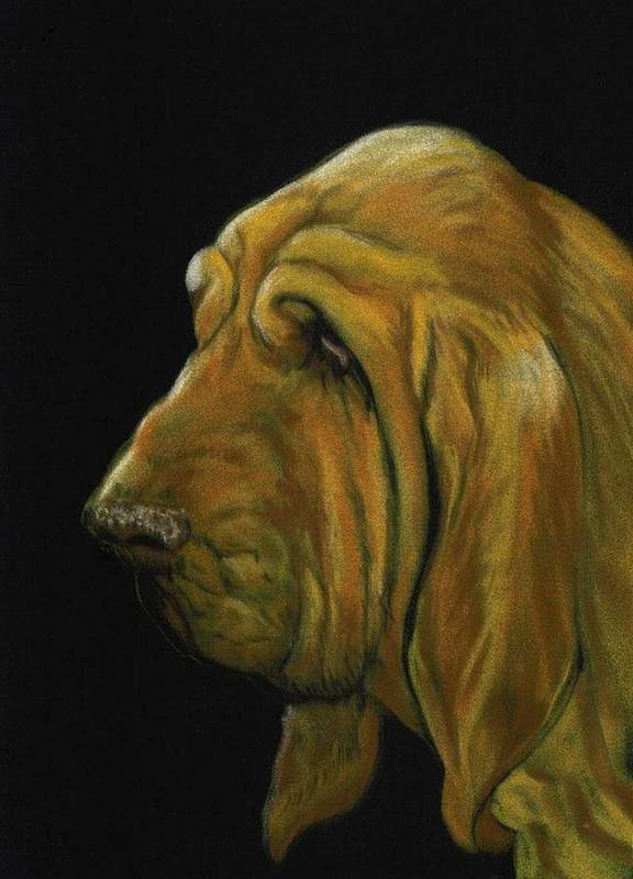 Bloodhound Poster featuring the painting Bloodhound by Charlotte Yealey