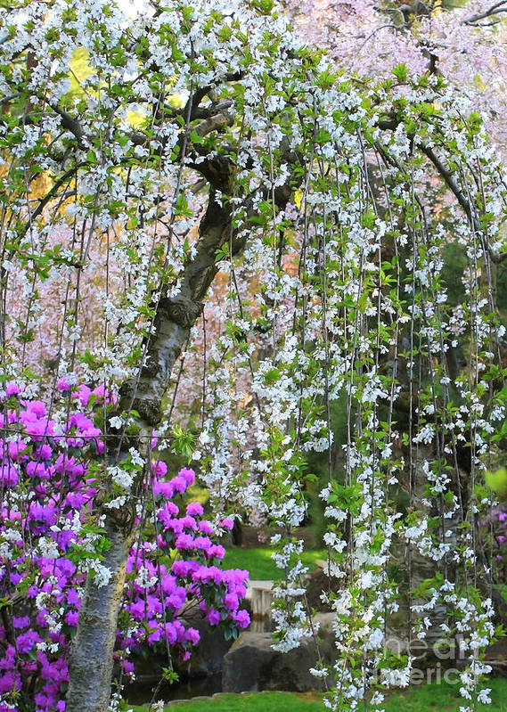 Blossoms Galore Poster featuring the photograph Blossoms Galore by Carol Groenen