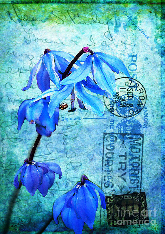 Flowers Poster featuring the photograph Blue Bells On Vintage 1936 Postcard by Nina Silver
