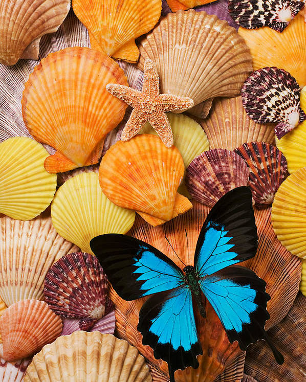 Butterfly Poster featuring the photograph Blue Butterfly And Sea Shells by Garry Gay