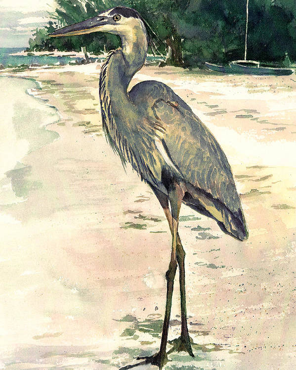 Blue Heron Poster featuring the painting Blue Heron On Shell Beach by Shawn McLoughlin