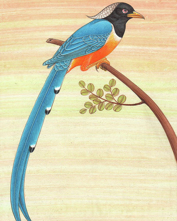 Blue Magpie Bird Watching Painting Forest United States Indian