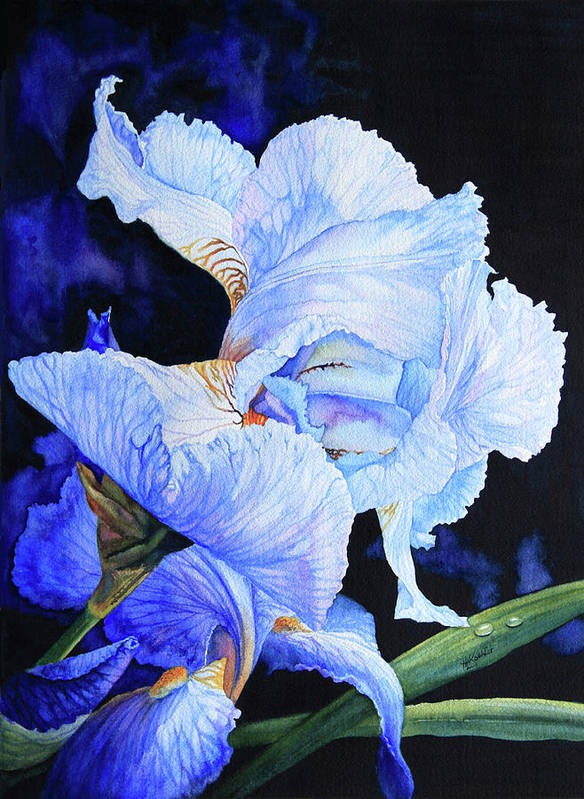 Floral Painting Poster featuring the painting Blue Summer Iris by Hanne Lore Koehler