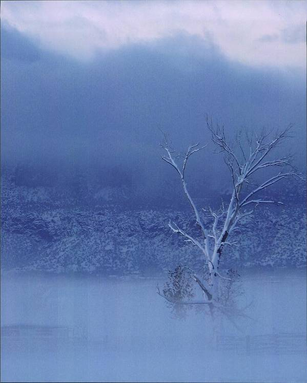 Landscape Poster featuring the photograph Blue Winter by Yolanda Lange