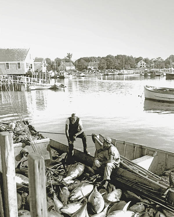 Bluefin Tuna Poster featuring the photograph Bluefin Tuna At Barnstable Harbor by Charles Harden