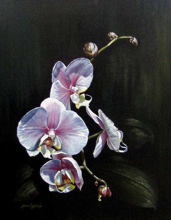 Orchid Poster featuring the painting Blushing by Joan Garcia