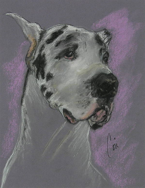 Great Dane Poster featuring the drawing Bodhi's Mystique by Cori Solomon