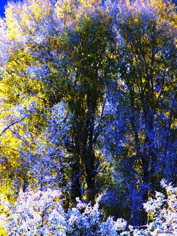A Dazzling Morning When The Snow Was Resembling A Lavender Lace Or Filigree On The Trees! Poster featuring the photograph Bosque Glow And Chantilly Snow by Anastasia Savage Ealy