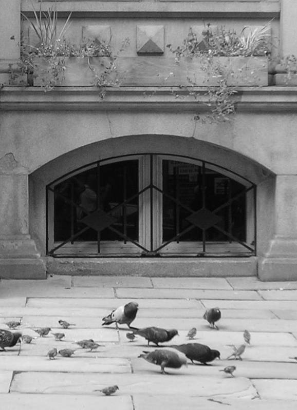 Pigeons Poster featuring the photograph Boston Scene by Nancy Ferrier