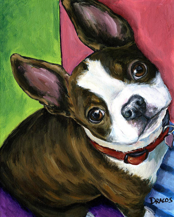 Boston Terrier Poster featuring the painting Boston Terrier Looking Up by Dottie Dracos