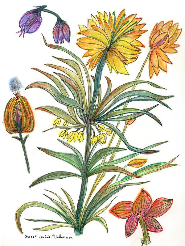 Flowers Nature Botany Watercolor Yellow Drawing Julie Richman Flora Pencil Poster featuring the painting Botanical Flower-53 yellow flower by Julie Richman