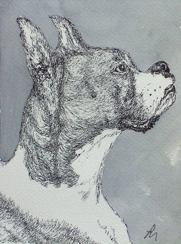 Dog Poster featuring the drawing Boxer by Pete Maier