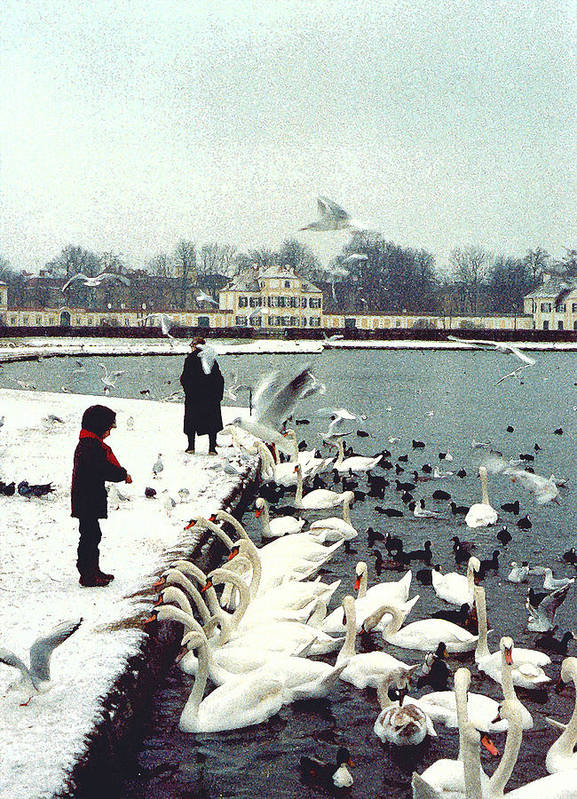 Swans Poster featuring the photograph Boy Feeding Swans- Germany by Nancy Mueller