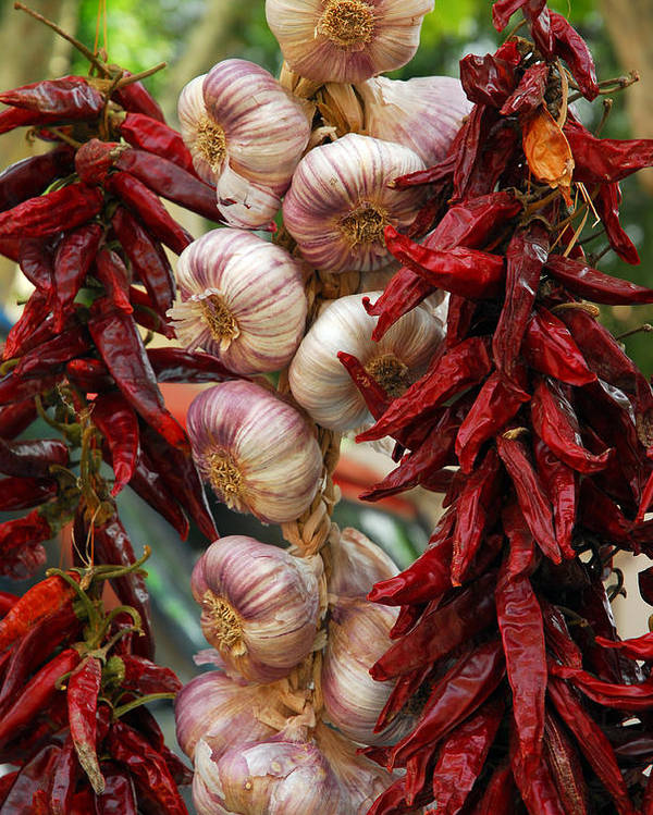 Provence Poster featuring the photograph Braid Of Garlic Framed By Ristras by Anne Keiser