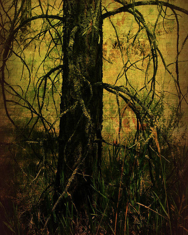 Mixed Media Poster featuring the photograph Branching Out by Bonnie Bruno