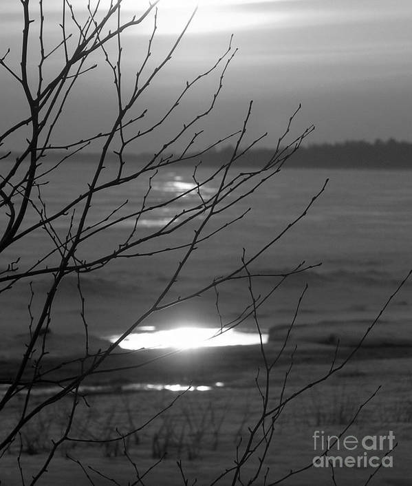 Black And White Sunset Over Lake Michigan Poster featuring the photograph Branching Out by Scott Heister