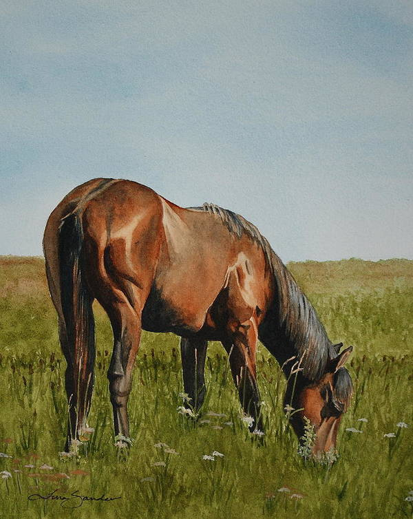 Grazing Horse Poster featuring the painting Breezy by Tina Sander