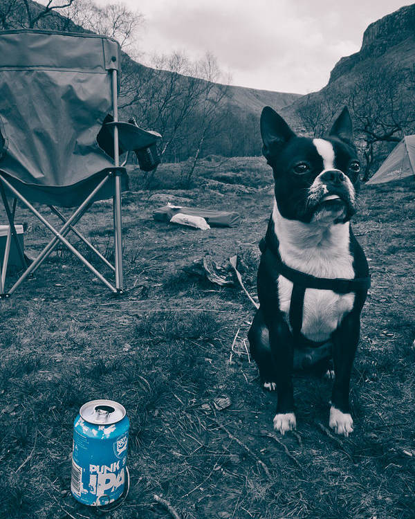 Beer Poster featuring the photograph Brewdog Bull by Justin Albrecht