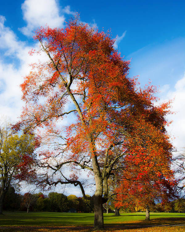 Fall Colors Poster featuring the photograph Bright Fall Colors by Tracy Winter