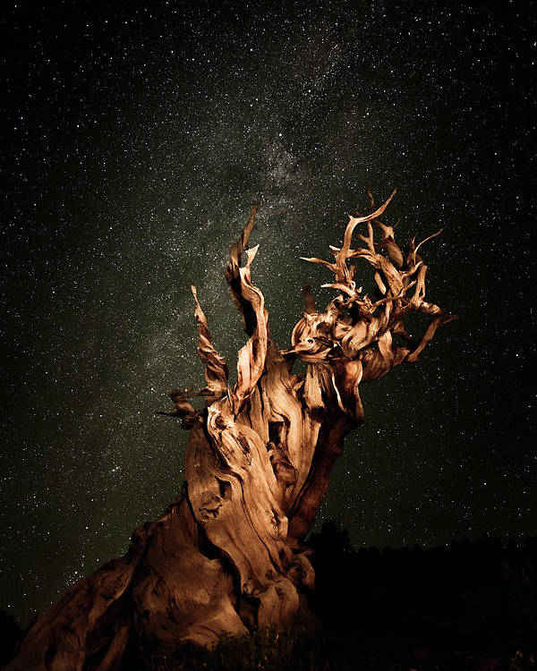 Poster featuring the photograph Bristlecone Nights by Stacie Rabe