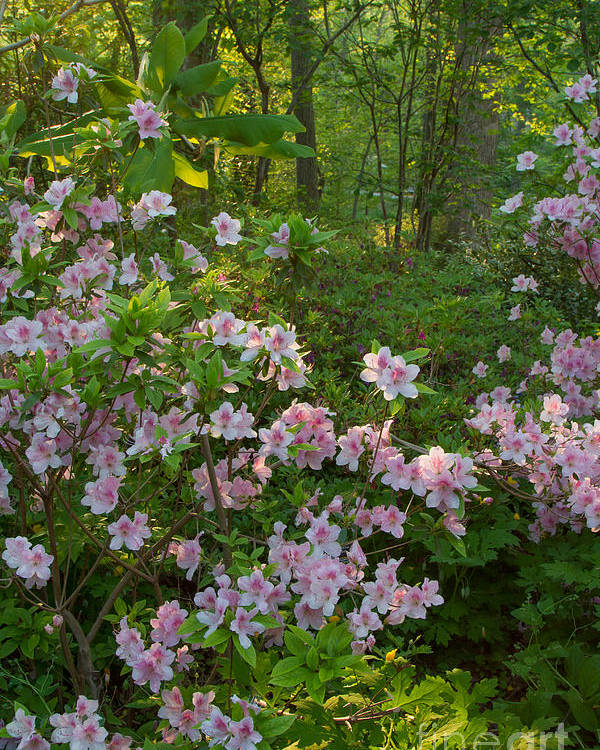 Spring Landscapes Poster featuring the photograph Brookside Gardens 5 by Chris Scroggins