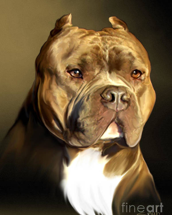 Spano Poster featuring the painting Brown And White Pit Bull By Spano by Michael Spano
